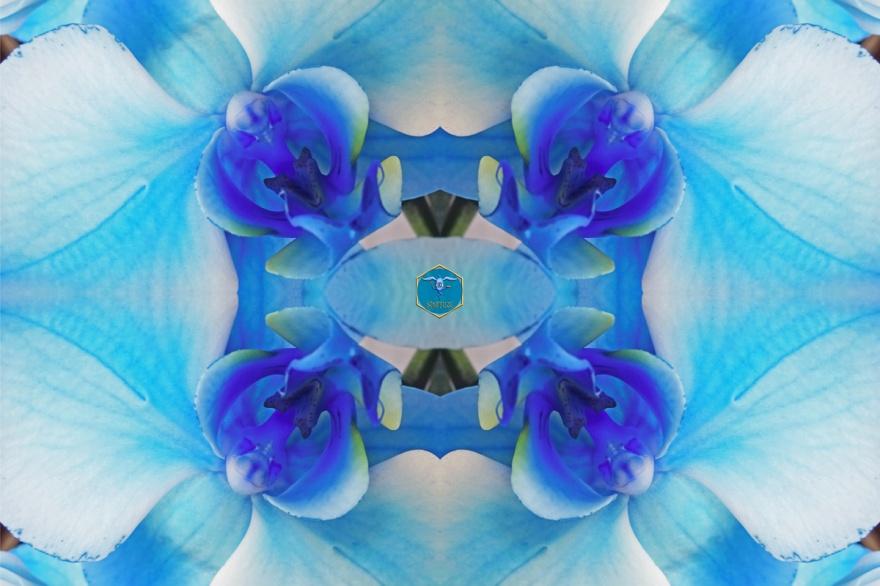 Rumpelstil_TPOS-Blaue Orchidee 2